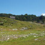 Vogel Slovenië