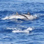 Dolfijnen in Genua